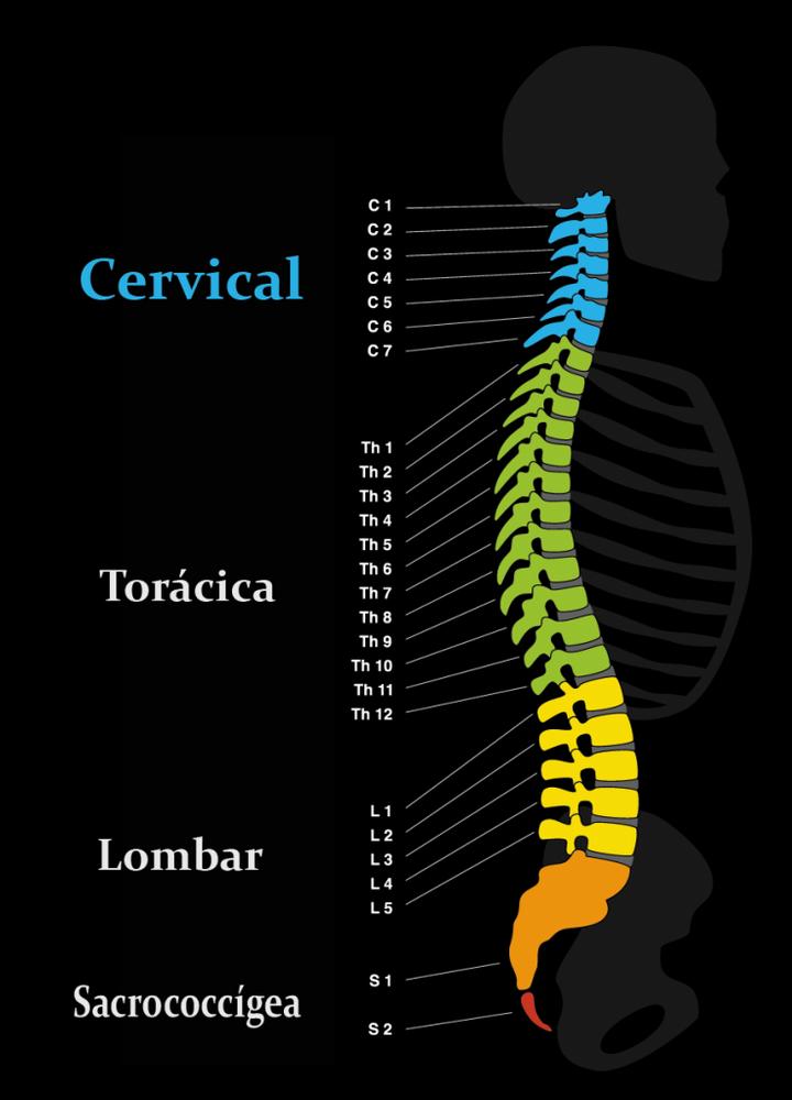 Patologia da coluna